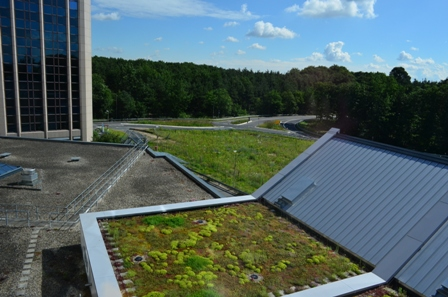 綠屋頂、透水鋪面的整合運用(圖片提供:王价巨)